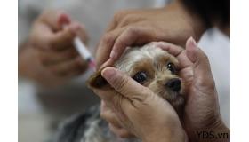 Dịch vụ tiêm phòng thú cưng